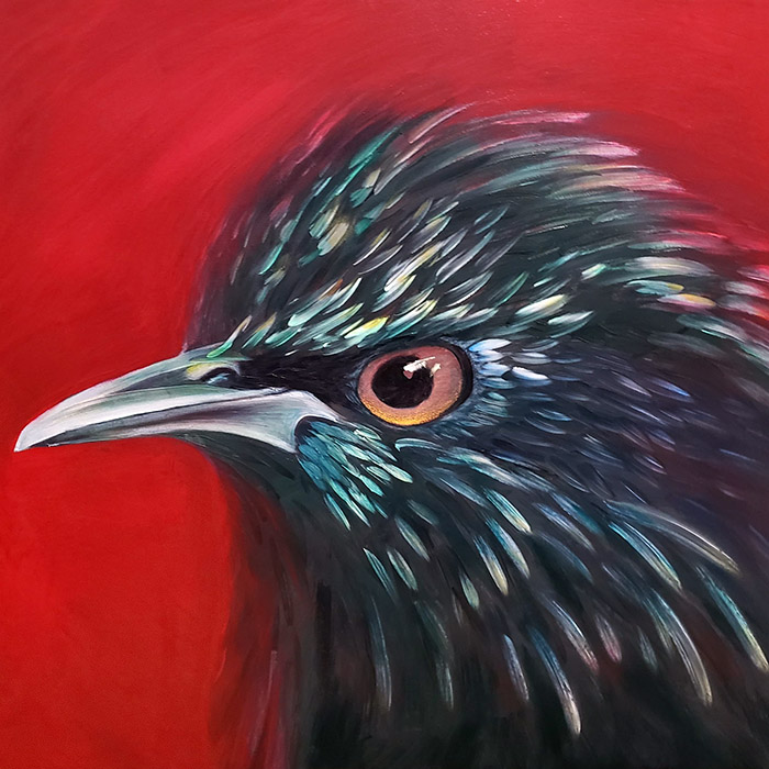 Red Starling